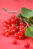 Red currant bunch Royalty Free Stock Images