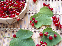 Red currant. Busket with red currant on wooden dask Stock Images