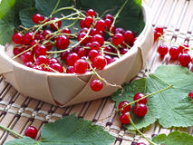 Red currant. Busket with red currant on wooden dask Stock Image