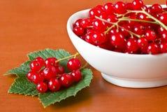 Red currant in ceramic bowl Stock Image