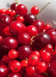 Red currant and cherry Royalty Free Stock Images