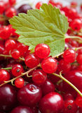 Red currant and cherry with leave Royalty Free Stock Image