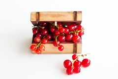Red Currant in the chest Stock Photography