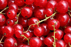 Red Currant Close-up Royalty Free Stock Image