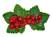 Red Currant close up Stock Photography