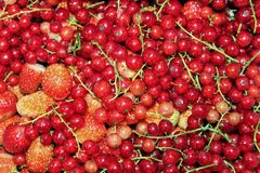 Red currant close-up with a small addition of strawberries. royalty free stock images