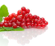 Red currant - close-up on white background Stock Images
