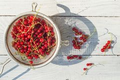 Red currant in a colander. On a white wooden table stock photo