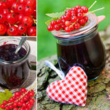 Red currant collage Royalty Free Stock Images