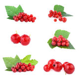 Red Currant collection Stock Photo