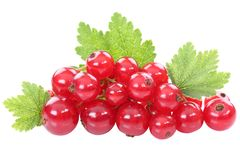 Red currant currants berries berry fruits fruit leaves isolated Stock Photos