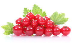 Red currant currants berries fresh fruits fruit isolated on whit Stock Photography