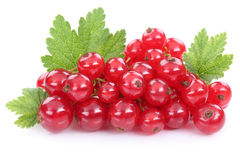 Red currant currants berries fruits fruit isolated on white Stock Image