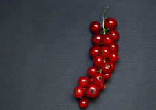 Red currant on the dark background Stock Image