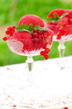 Red currant dessert wine sorbet, copy space for your text Stock Image