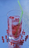 Red currant drink Stock Images