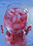 Red currant drink Stock Image