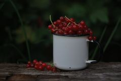 Red currant in an enamel mug stock image