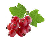 Red currant extra small with leaf isolated on white background Royalty Free Stock Images
