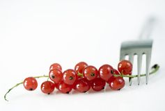 Red currant with fork Royalty Free Stock Photo