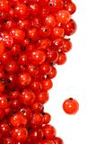 Red currant frame Royalty Free Stock Photo