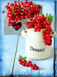 Red currant. Royalty Free Stock Image