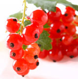 Red currant fruit Royalty Free Stock Images