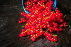 Red currant fruit bucket summer pouring wooden table Royalty Free Stock Images