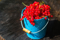 Red currant fruit bucket summer rain drops water wooden Royalty Free Stock Image