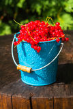 Red currant fruit bucket summer rain drops water wooden Stock Image