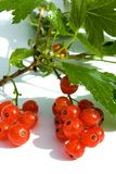 Red  currant fruit and green leaves Royalty Free Stock Photography