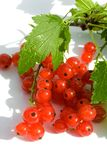 Red  currant fruit and green leaves Royalty Free Stock Images