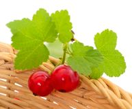 Red currant fruit. With leaf sprigs in basket isolated over white background royalty free stock photography