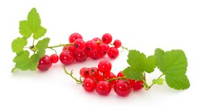 Red currant fruit. With leaf sprigs isolated over white background stock images