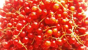 The Red currant royalty free stock photos