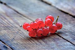 Red currant in garden Royalty Free Stock Photography