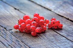 Red currant in garden Stock Photography
