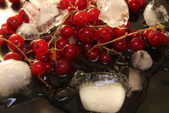 Red currant in glass bowl against black background and thawing c Stock Photo