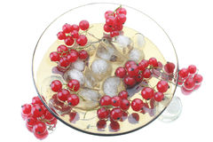 Red currant in glass plate. With ice. Isolated on white background Stock Images