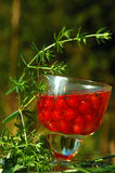 Red Currant in the Glass Of Wine.  Royalty Free Stock Photo