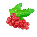 Red Currant Green Leaf Stock Images