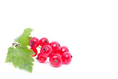 Red currant with green leaf isolated on white background Stock Photos