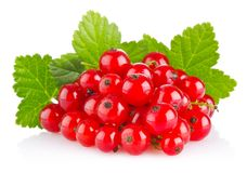 Red currant with green leaf. On white background stock photography