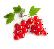 Red currant with green Leafs Royalty Free Stock Photo