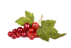 Red currant with green leaves royalty free stock photo