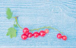 Nature ornament. Red currant on the light blue wooden background royalty free stock photography