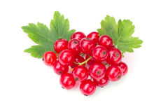 Red currant with a green leaves Royalty Free Stock Photos
