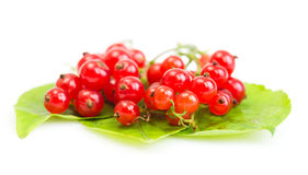 Red Currant on green leaves. On white background Royalty Free Stock Photos