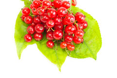 Red Currant on green leaves. On white background Royalty Free Stock Photo