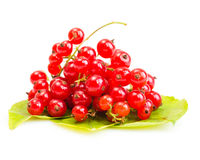 Red Currant on green leaves Stock Photos
